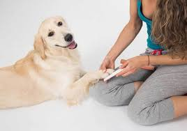 how to trim dog nails without clippers