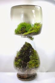 we create objects of wilderness. one of a kind artisan terrariums of local  plants and moss inside repurposed found and heirloom glass vessels.