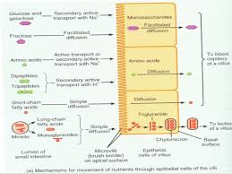 Venn Diagram Of Diffusion Osmosis And Active Transport Transport Across Cell Membrane