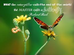 Butterfly Beauty Quotes Best of Butterflyquote Of The Day Yellowstar Essentials Blog