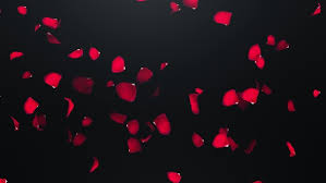 Fyling Petals Of Roses With On An Black Background