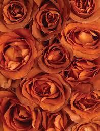Over roasting is the primary reason for burnt taste. Coffee Break Roses Calyx Flowers Inc Broken Rose Orange Aesthetic Orange Wallpaper