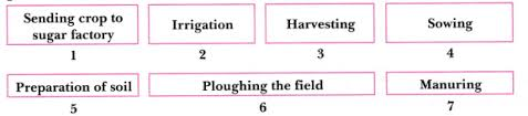 Arrange The Following Boxes In Proper Order To Make A Flow
