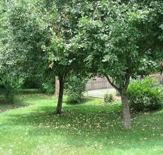 Good Trees For Backyard  Home DesignGood Trees For Backyard
