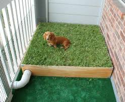 house training dogs luxury dog porch potty with real grass and drainage system of house training