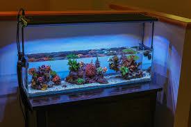 aquarium office. 12 Gallon Office Nano - 3.5 Years Aquarium
