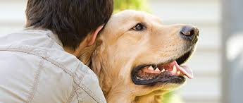 tooth extraction complications in dogs