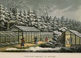 Small Picture Painting of Vintage Greenhouses used for Forcing Garden in Winter