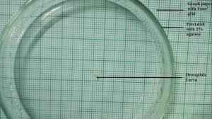 Larval Locomotion Assay Grids In A Transparent Petri Dish 2