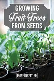 When Do You Plant Fruit Trees