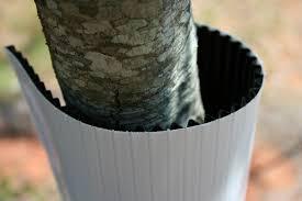 plastic tree guards