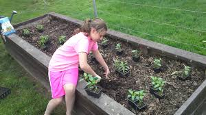 how to start a small garden. Starting From Seed Or Buying A Greenhouse Nursery Many Starter Plants Can Be Purchased At Local How To Start Small Garden Y