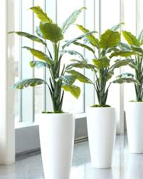 Image Men Picture Of Enchanting Cm Tall Decorative Artificial Plant Without Pot Office Fake Office Plants Avril Paradise Picture Of Enchanting Cm Tall Decorative Artificial Plant Without