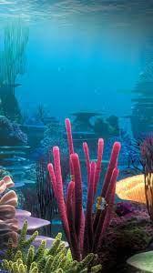 Underwater iPhone 6 Wallpapers ...