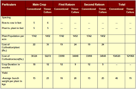 Sugarcane Fertilizer Chart Banana Expert System