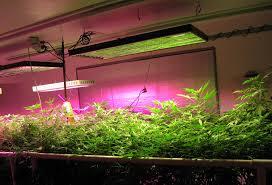 diy indoor herbs garden ideas picture