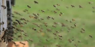 Αποτέλεσμα εικόνας για νεονικοτινοειδών εντομοκτόνων