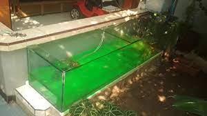 Aquarium Nan Cantik Outdoor Luar Rumah Youtube