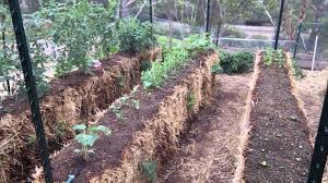 the best 10 reasons to try hay bale gardening how to get started the best plants for hay bale beds