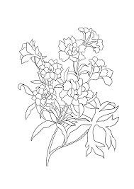 Botany Coloring Pages Sheets For Adults Botanical Google Search
