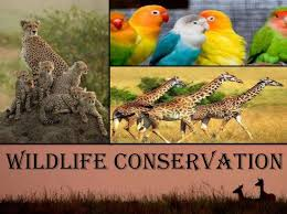 the conservation of wildlife which includes native plants and s depends on protection of forests wildlife is the direct of the land resources