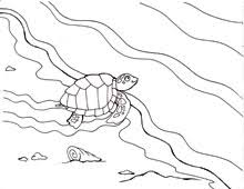 Small Picture Coloring Pages Sea Turtles and the Quest to Nest WaterLife