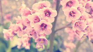 vintage flower photography backgrounds. Vintage Flower Tumblr Google Search Pink Photography Hd Picture In Backgrounds
