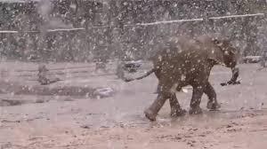 <b>Baby elephants</b> play in snow at zoo in Arizona - ABC7 Los Angeles