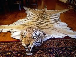 ref lion skin rug size trophy heads skins