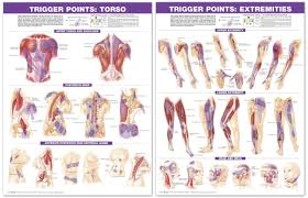 Shoulder Trigger Points Chart Trigger Point Chart Set Torso And Extremities 2nd Edition Laminated