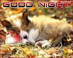 Image result for goodnight quote blingee