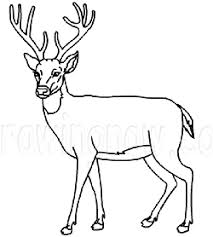 How To Draw Deer Drawing Tutorials Drawing How To Draw Deer
