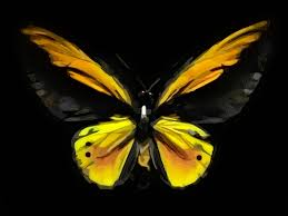 Color Changing Wallpaper Butterflies Get A Life By Colour Changing Inks Faster World