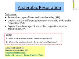 aerobic respiration equation. aerobic respiration equation