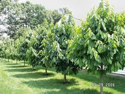 Fruit Trees In Michigan