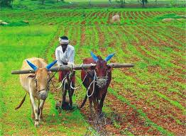 essay on the importance of agriculture in the n economy what are the features of n agriculture gkspread