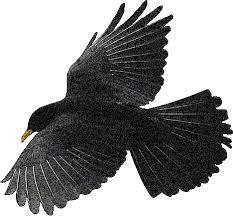 Kraaien Vogel Plaatjes Animaatjesnl