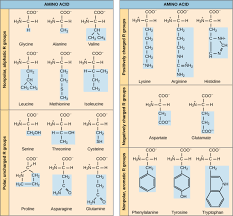 Amino Acid Characteristics Chart Amino Acids Introduction To Chemistry