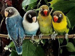 short beak birds
