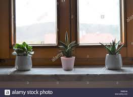 Drei Grüne Kaktus Pflanzen Auf Der Fensterbank In Einer Reihe Als