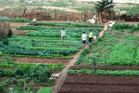 food securitization and urban agriculture in hanoi vietnam url
