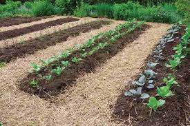 how to make a garden bed. Beautiful How Garden Rows In How To Make A Bed