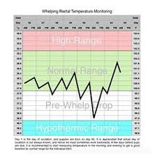 Whelping Temperature Chart Download Temperature Chart