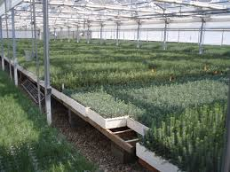 Image result for lucky peak nursery boise id