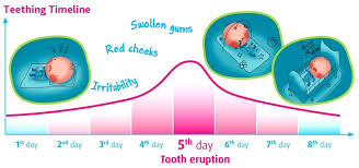 Teething Chart Babies Baby Teeth Chart Timeline Careeredge Info