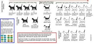 Cat Nail Cap Size Chart Bicolor Cat Wikipedia