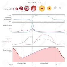 Menstrual Cycle Temperature Chart The Menstrual Cycle Showing Changes Hormones Endometrial Basal