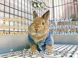 กระต่ายซึม ไม่กินอาหาร น้องป่วยเป็นอะไรคะ - Animal Space Exotic Pet  Hospital โรงพยาบาลสัตว์แอนิมอลสเปซ รักษาสัตว์ Exotic สัตว์แปลก สัตว์หายาก