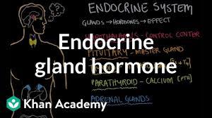 Endocrine Gland Hormone Review Video Khan Academy
