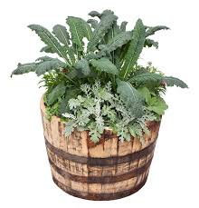 kale flowers herbs container garden
